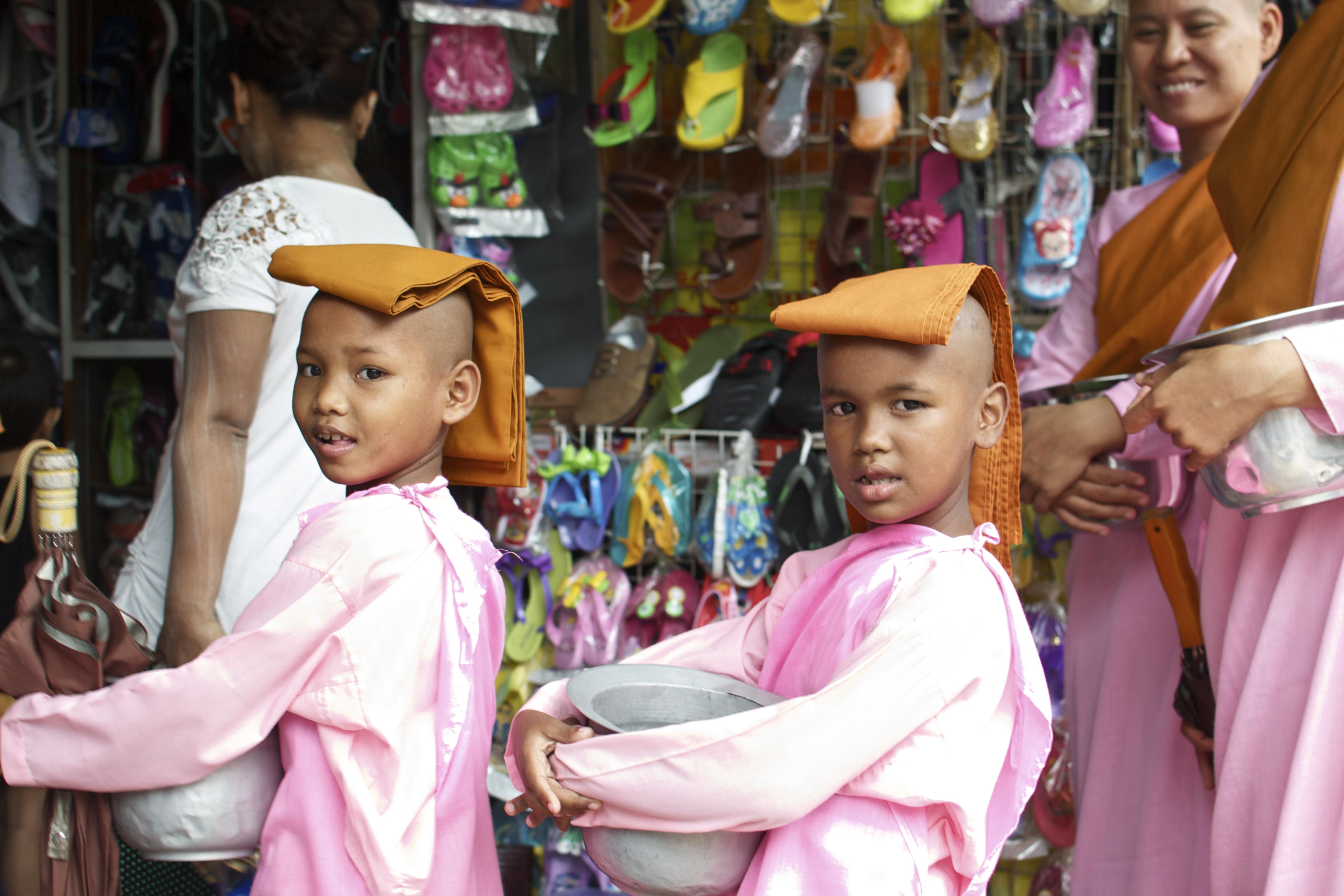 Pink Monkettes in Yangon,Myanmar