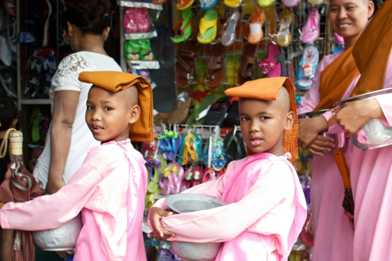 Pink Monkettes in Yangon, Myanmar
